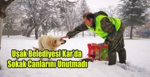Uşak Belediyesi Kar'da Sokak Canlarını Unutmadı